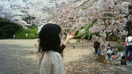熊野神社の桜3