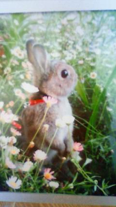 ウサギの乱太郎くん