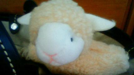 癒しの羊ちゃん