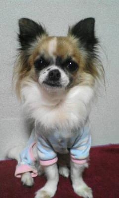 渡邊さんの愛犬クリン