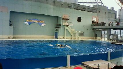 白イルカのシンクロ