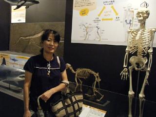 人体&犬の骨格標本