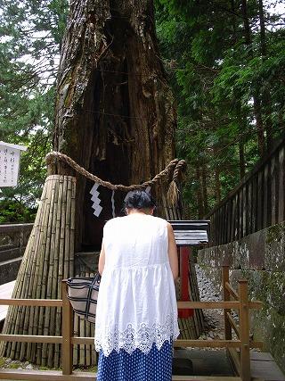 樹齢600年の叶杉!ほこらに向かって祈願すると、願いが叶うと言われています。